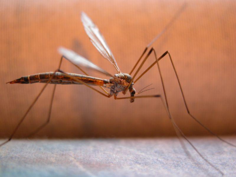 Διώξτε τα κουνούπια από το σπίτι σας