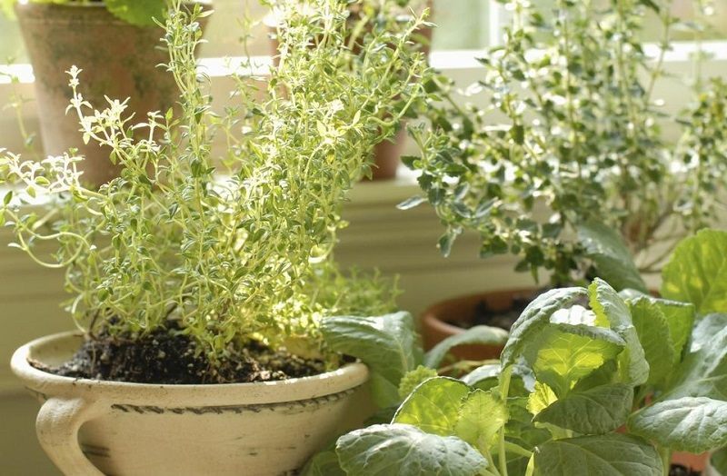 Βότανα για τον κήπο του σπιτιού σας!